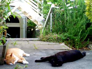 Solstice the Cat